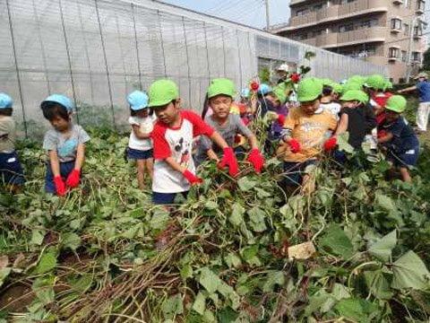 Bé học cách thu hoạch và trồng trọt tại trường