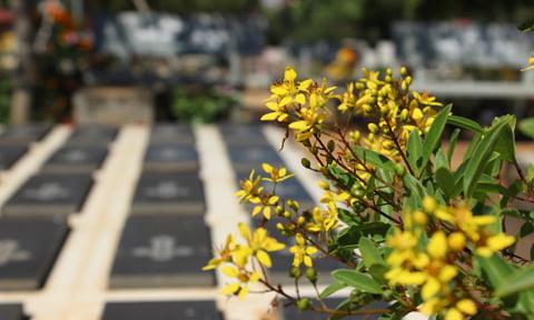 Những ngôi mộ nhỏ nằm yên ắng trên một quả đồi được bao bọc bởi những hàng cây xanh mát và nhiều hoa xóa tan nét hoang sơ, cô tịch