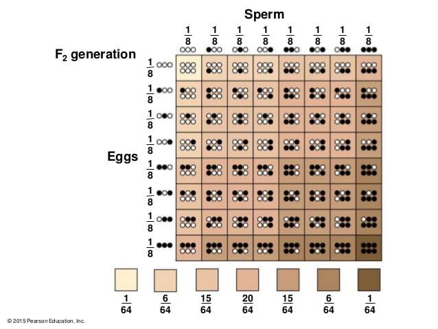 Màu da của bé sẽ bị quy định bởi gen của cả ba lẫn mẹ